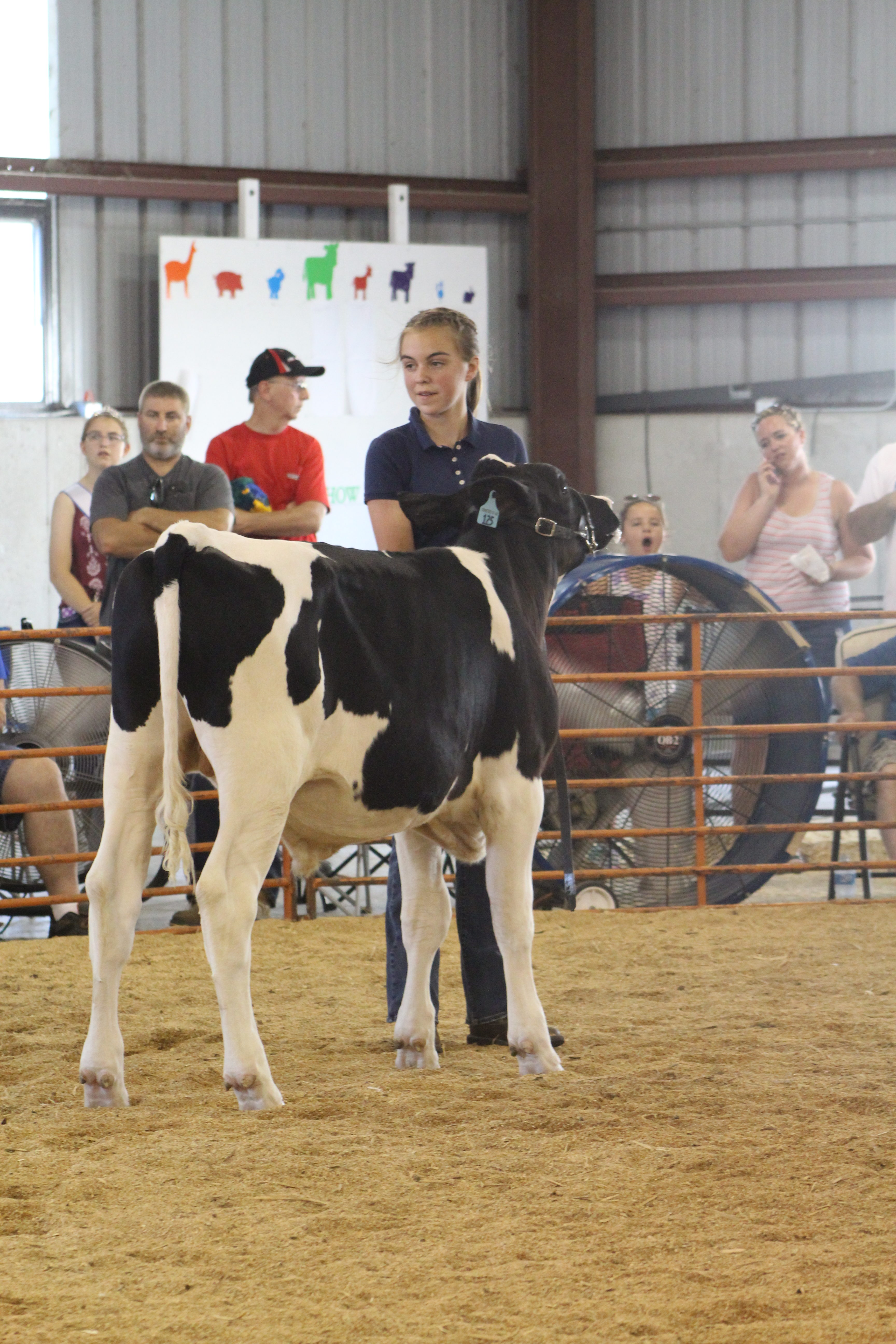 A 'top-notch quality show' put on at the Junior Fair Dairy
